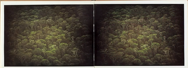 Amazonia11Andujar