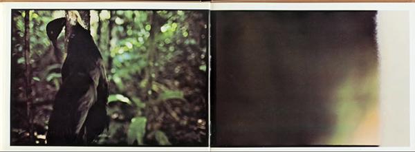 Amazonia19Andujar